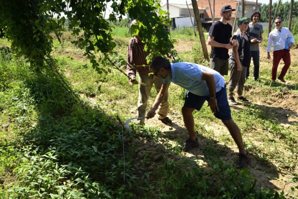 Local hops for local people – Orbigo Valley hops in Castile and León